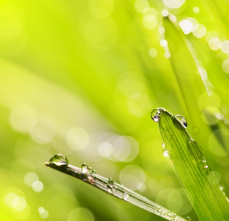 Spring or summer abstract nature background with grass and blue sky Stock Photo - 12782465