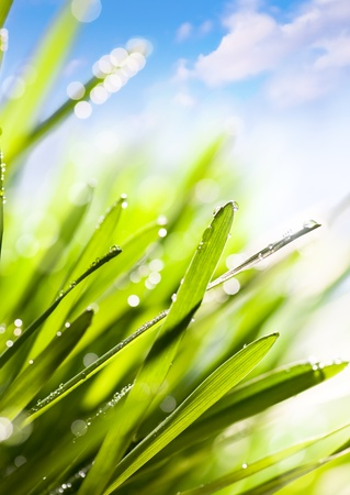 Spring or summer abstract nature background with grass and blue sky photo