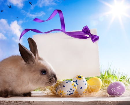 Easter greeting card with the Easter bunny and Easter eggs Stock Photo - 12782473