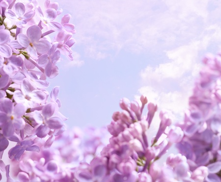 Spring lilac flowers background photo