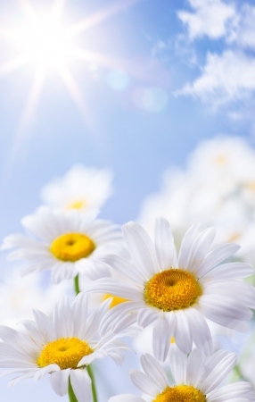 floral summer background Stock Photo - 13782045