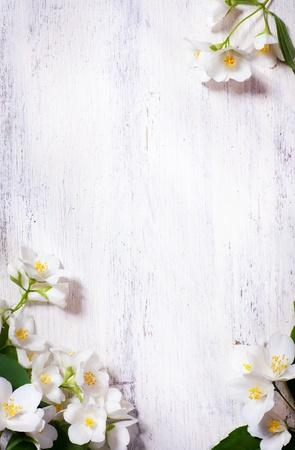 art jasmine spring flowers frame on white background Stock Photo