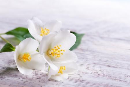 flor de jasmim branco no fundo de madeira branco