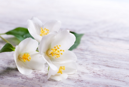 jasmine white flower on white wood background photo