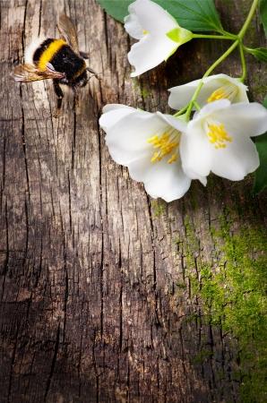 wesp: bij en bloem jasmijn Stockfoto