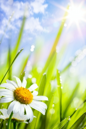 jule: natural summer background; Beautiful daisies flowers growing in grass Stock Photo