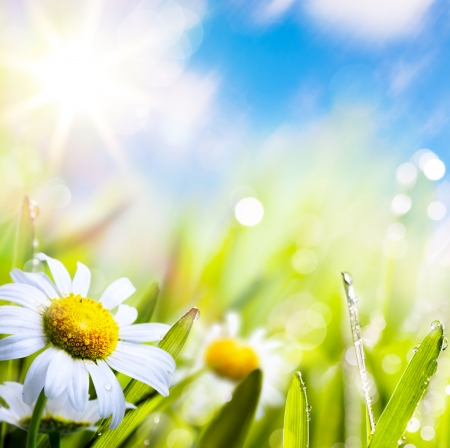 art abstract background summer flower in grass with water drops on sun sky   photo