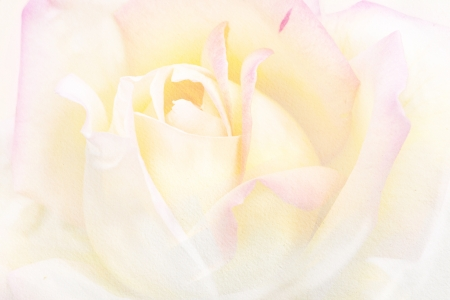 toned: vintage background of rose flower in watercolor paintings  Stock Photo