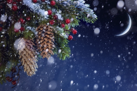 Christmas tree covered with snow on the blue night sky Stock Photo - 15975410