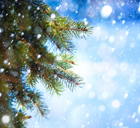snow falling: Christmas tree branch on a blue background Stock Photo