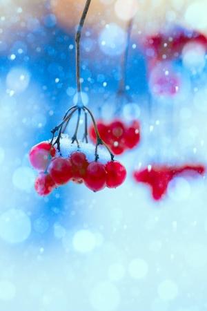 winter nature background photo