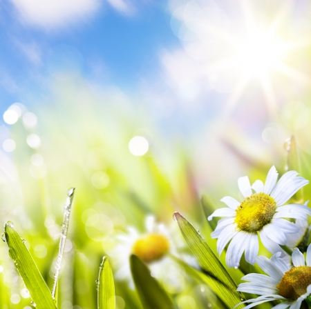 art abstract background spring summer flower in grass with water drops on sun sky Stock Photo - 17660038