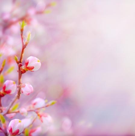 Beautiful spring blossoming tree on sky background Reklamní fotografie