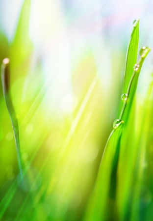 Spring or summer abstract nature background with grass in the blue sky in the back  photo
