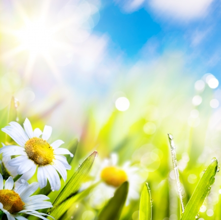 art abstract background spring summer flower in grass with water drops on sun sky   photo