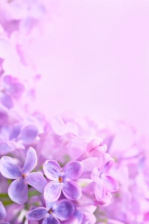 Spring flowers abstract background Reklamní fotografie