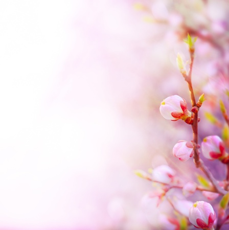 flower border: Beautiful spring blossoming tree on sky background Stock Photo