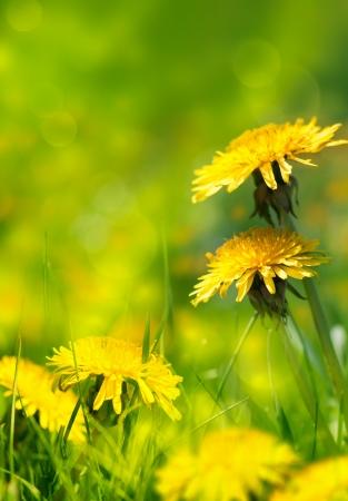 art Beautiful spring flowers background photo