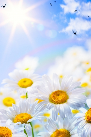 floral spring and summer background Stock Photo - 17963068