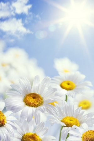 floral spring and summer background photo