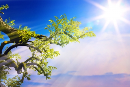 colour intensity: natural spring background with tree  branch and sun