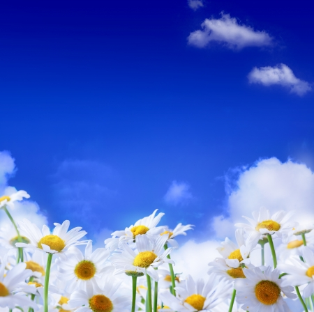 spring flowers and blue sky background photo