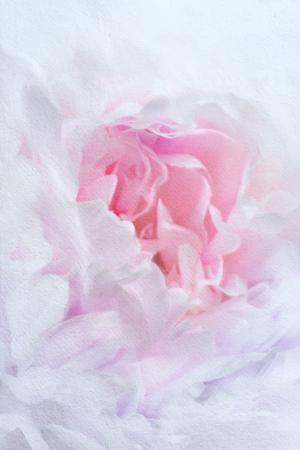 fundo do vintage de flores em aquarela Banco de Imagens