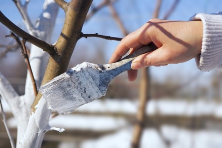 hand tree: SPRING protection of fruit trees in the garden
