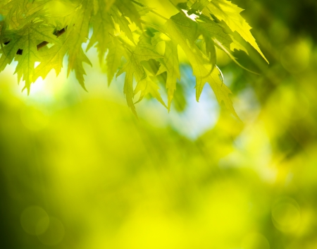 abstract spring green background Stock Photo - 18019052