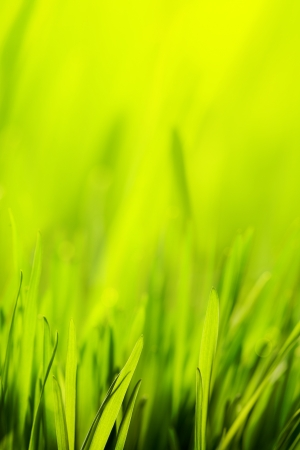 abstract spring green background Stock Photo - 18019056