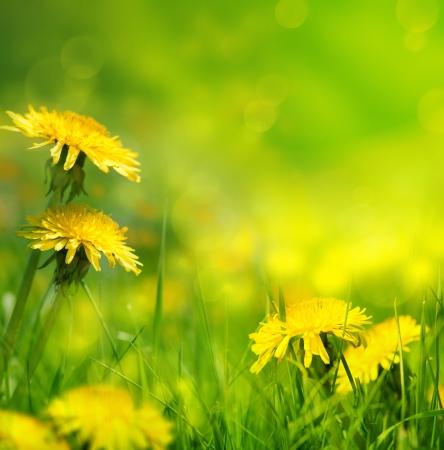 art Beautiful spring flowers background Reklamní fotografie