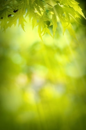 good life: abstract spring green background Stock Photo