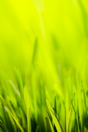 abstract spring green background Stock Photo - 18141056