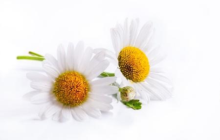 daisies summer white flower isolated on white background Stock Photo