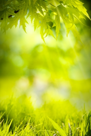 abstract spring green background Stock Photo - 18141069