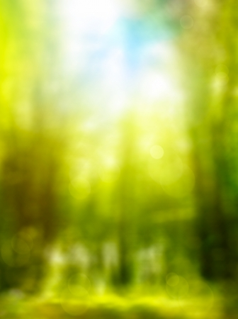 abstract forest spring background with green leaves and sunlight Stock Photo - 18283884