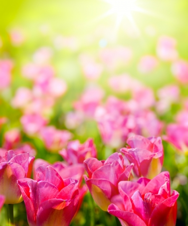 art spring backsround wild flowers in the sunlight