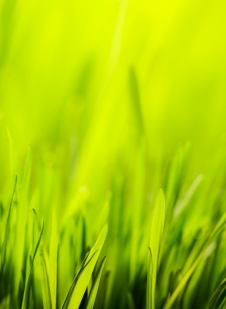 abstract spring nature green background Stock Photo - 18317689