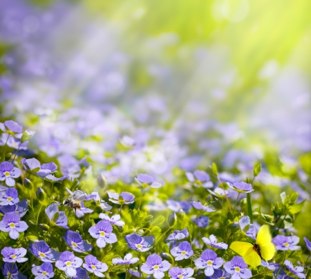 spring wild flowers in the sunlight background Stock Photo