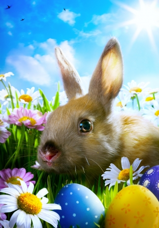easter Baby rabbit and easter eggs photo