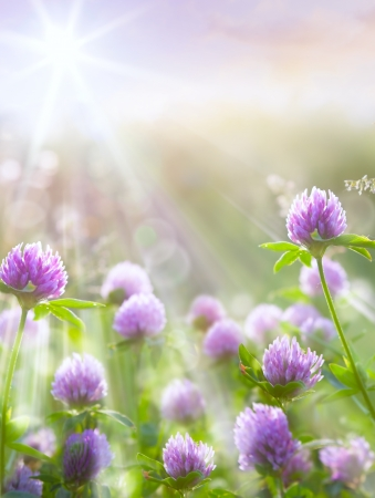Art spring natural background, wild clover flowers photo