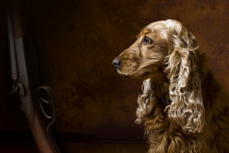spaniel: art waiting Stock Photo