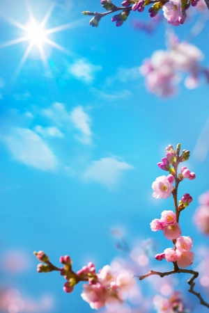 abstract floral spring background
