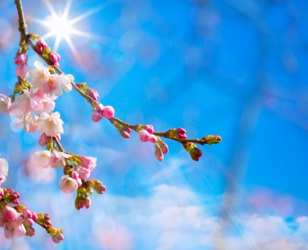 abstract Spring border background with pink blossom  photo