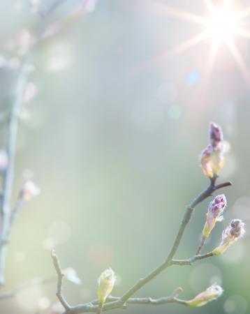 naturaleza: Primavera Hermoso �rbol en flor en el cielo de fondo