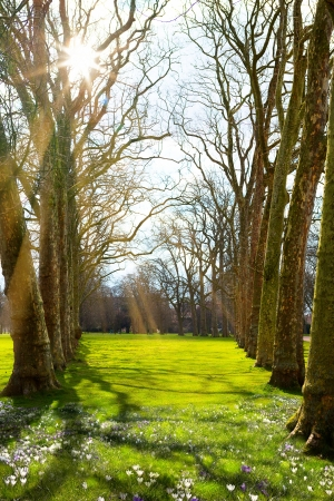 Sunlight in the green forest, spring time  photo