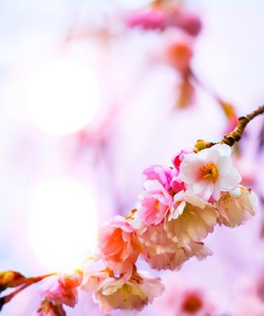 abstracto fondo hermoso de primavera con flores de color rosa Foto de archivo