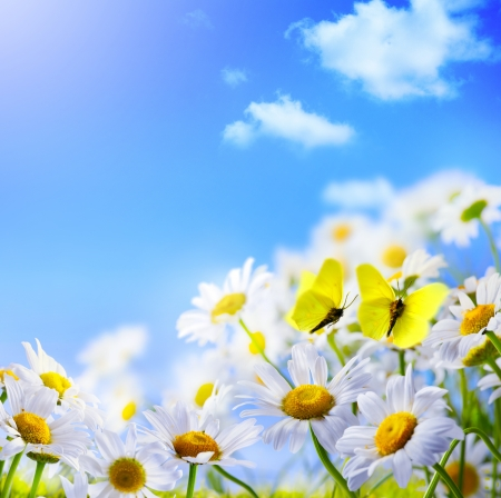 butterfly border: spring background with  on a background of blue sky