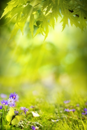 abstract spring green background Stock Photo - 19296330