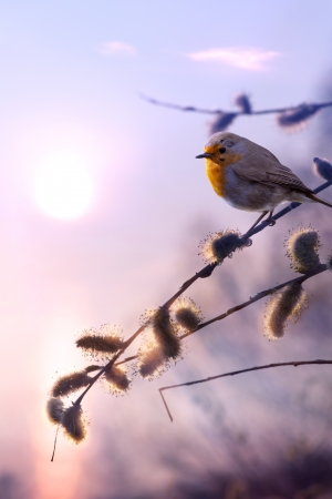 art beautiful spring morning nature background photo